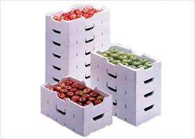 蔬菜水果保鮮箱