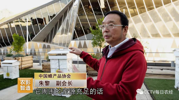 CCTV《每日農經》  養蜂不賣王漿賣蜂王(葆春澳洲專題上)